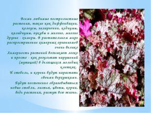 Всеми любимые пестролистные растения, такие как диффенбахии, колеусы, пеларго
