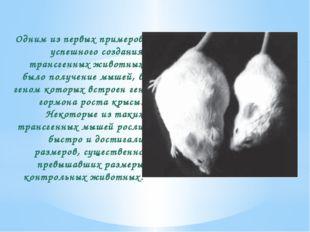 Одним из первых примеров успешного создания трансгенных животных было получен