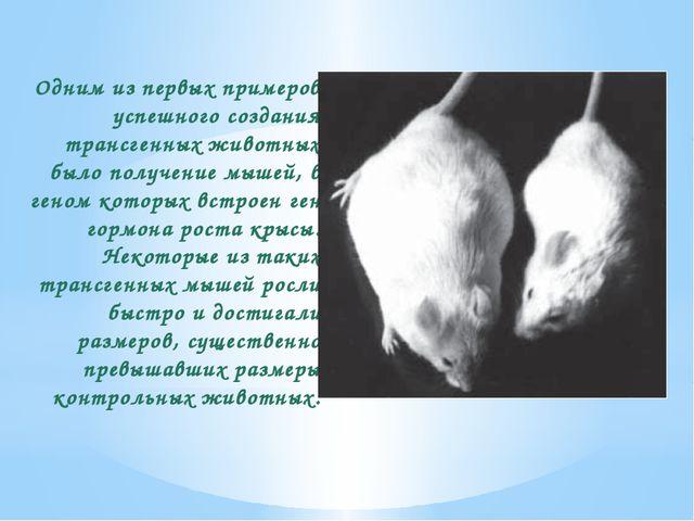 Одним из первых примеров успешного создания трансгенных животных было получен...