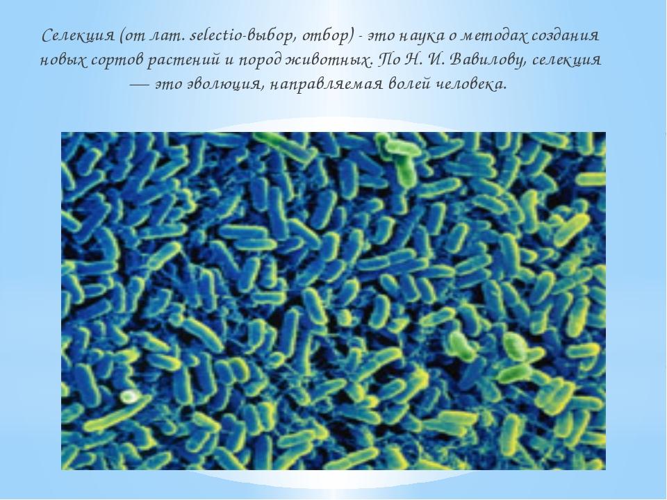 Селекция (от лат. selectio-выбор, отбор) - это наука о методах создания новых...