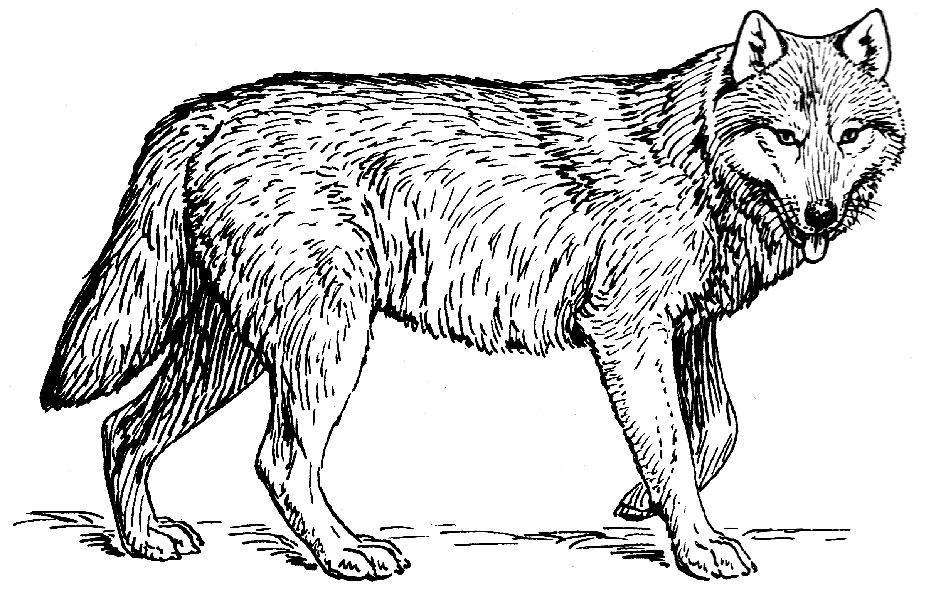 http://www.ikonolog.de/600/Wolf_%28PSF%29.jpg