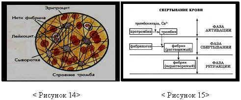 http://festival.1september.ru/articles/311647/img12.jpg