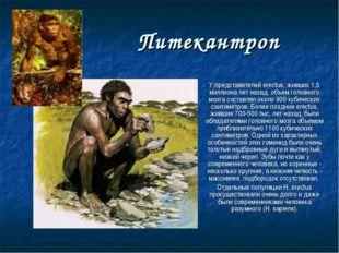 Питекантроп У представителей erectus, живших 1,5 миллиона лет назад, объем го