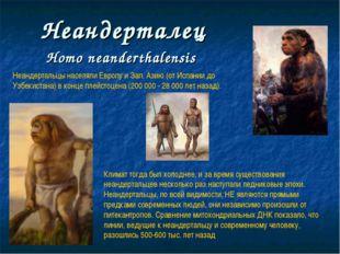 Неандерталец Нomo neanderthalensis Неандертальцы населяли Европу и Зап. Азию