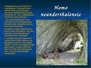 Нomo neanderthalensis Неандертальцы отличаются от современного человека более