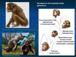 Дриопитек – предок человекообразных обезьян и человека Как видно из этого рис