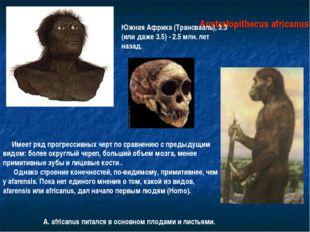 Australopithecus africanus Южная Африка (Трансвааль), 3.3 (или даже 3.5) - 2.