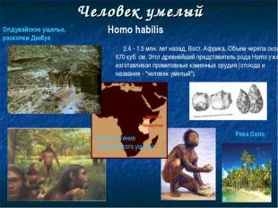 Человек умелый Homo habilis 2.4 - 1.5 млн. лет назад, Вост. Африка. Объем чер