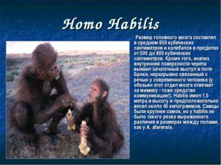 Homo Habilis Размер головного мозга составлял в среднем 650 кубических сантим
