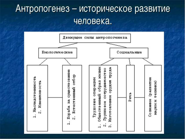 Антропогенез – историческое развитие человека.
