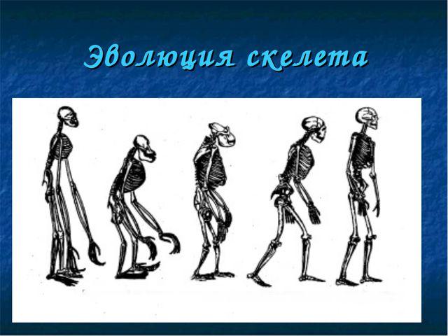 Эволюция скелета