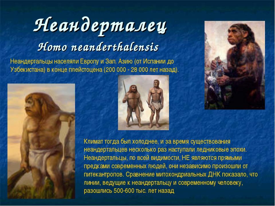 Неандерталец Нomo neanderthalensis Неандертальцы населяли Европу и Зап. Азию...