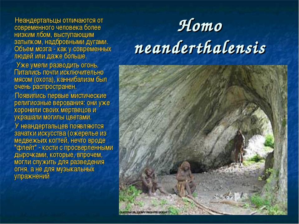 Нomo neanderthalensis Неандертальцы отличаются от современного человека более...