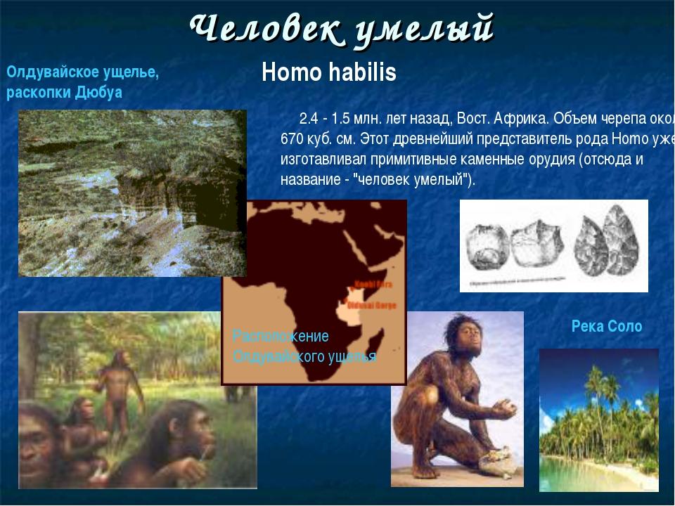 Человек умелый Homo habilis 2.4 - 1.5 млн. лет назад, Вост. Африка. Объем чер...