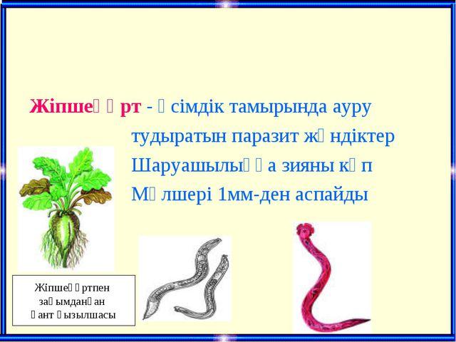 Жіпшеқұрт - өсімдік тамырында ауру тудыратын паразит жәндіктер Шаруашылыққа...