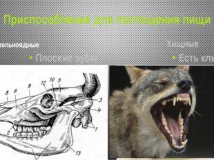 Приспособления для поглощения пищи Растительноядные Плоские зубы Хищные Есть