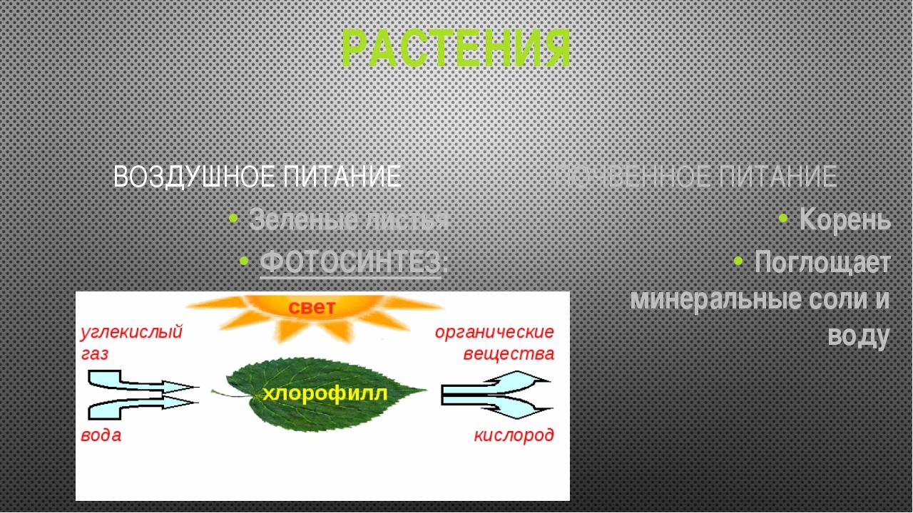 РАСТЕНИЯ ВОЗДУШНОЕ ПИТАНИЕ Зеленые листья ФОТОСИНТЕЗ: ПОЧВЕННОЕ ПИТАНИЕ Корен...