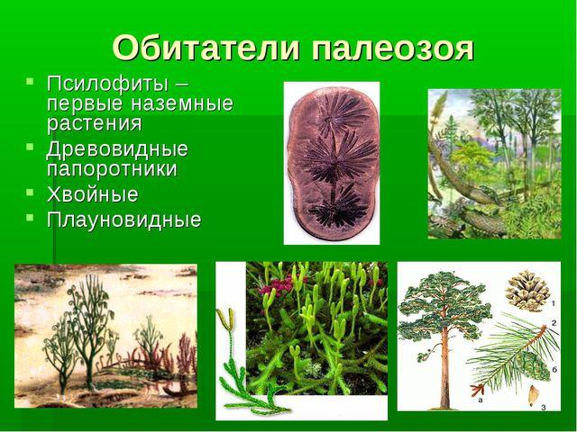 Псилофиты – первые наземные растения Древовидные папоротники Хвойные Плаунови...