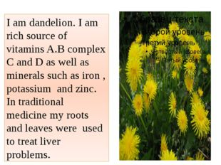 I am dandelion. I am rich source of vitamins A.B complex C and D as well as m