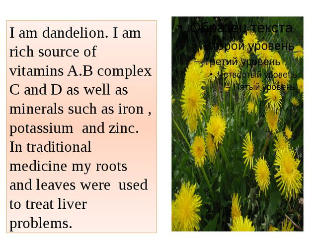 I am dandelion. I am rich source of vitamins A.B complex C and D as well as m...