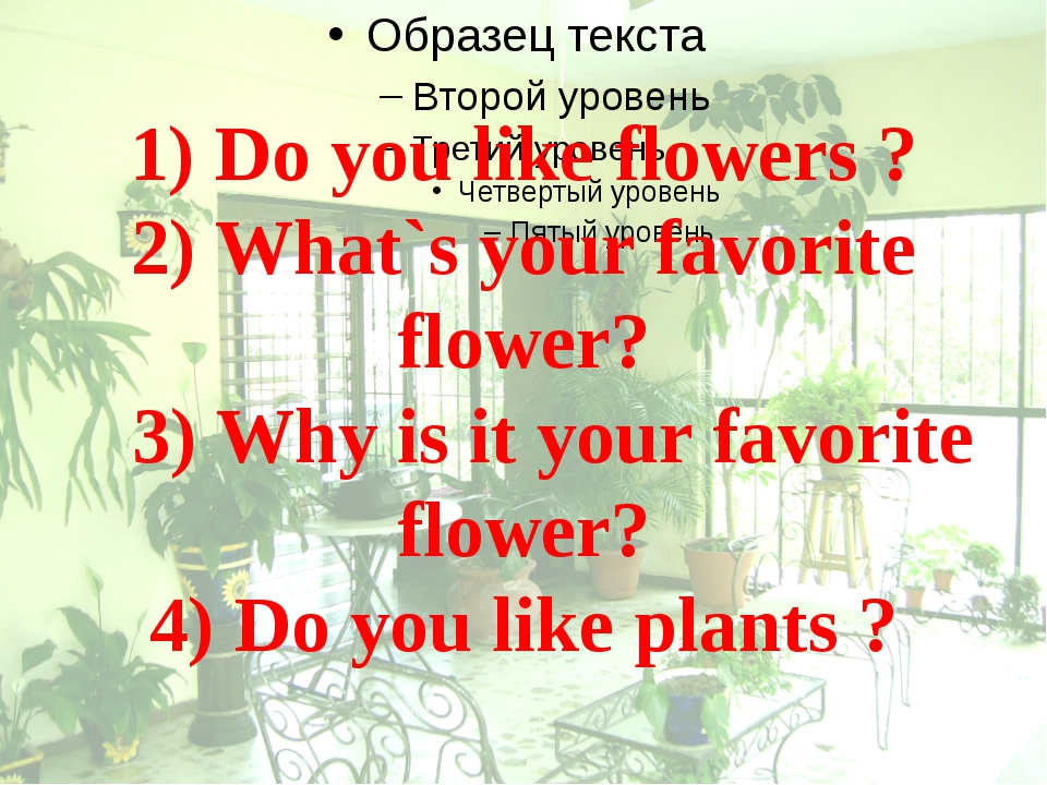 1) Do you like flowers ? 2) What`s your favorite flower? 3) Why is it your fa...
