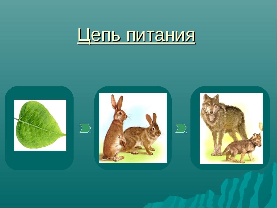 декора своего презентация цепи питания 3 класс листьев лепешку накладывают