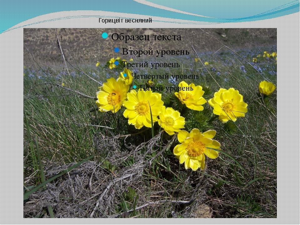 Горицвіт весняний