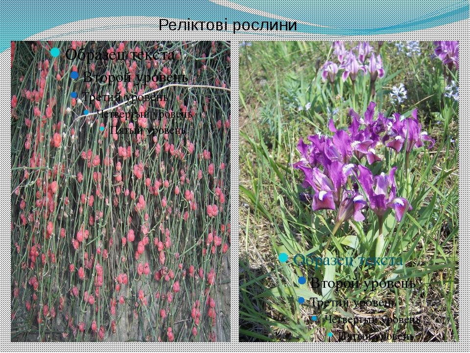Реліктові рослини