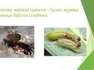 Мутуализм: морские креветки – бычки; муравьи и гусеницы бабочки голубянки.