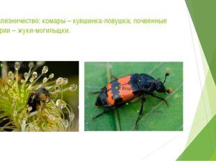 Сотрапезничество: комары – кувшинка-ловушка; почвенные бактерии – жуки-могиль