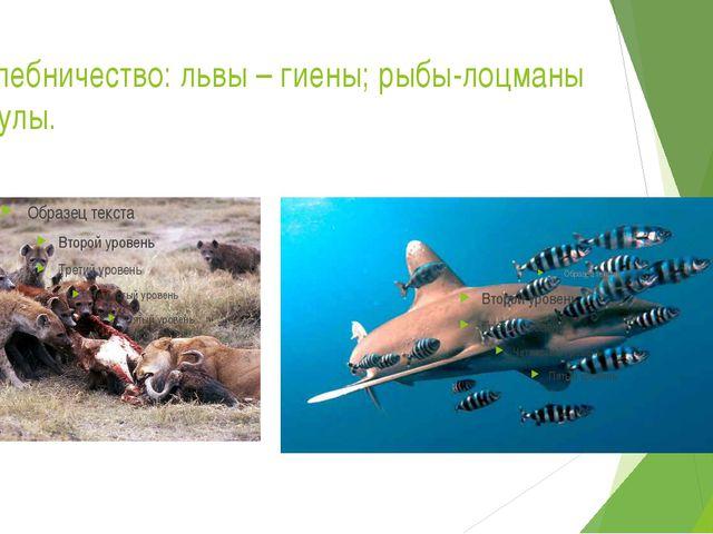 Нахлебничество: львы – гиены; рыбы-лоцманы – акулы.