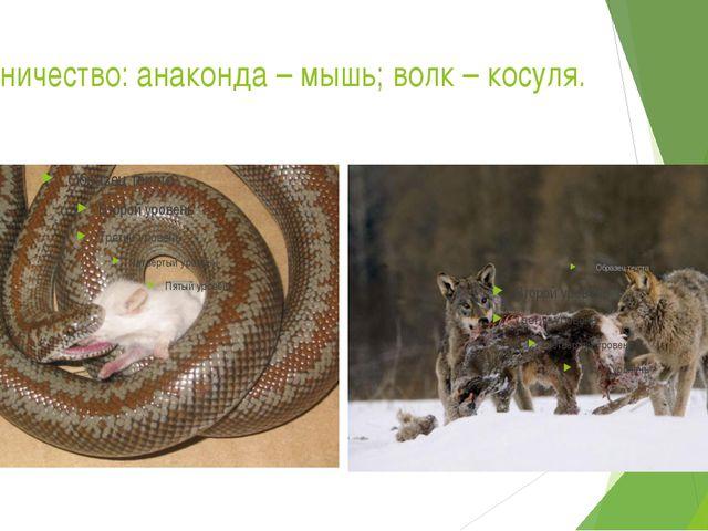 Хищничество: анаконда – мышь; волк – косуля.