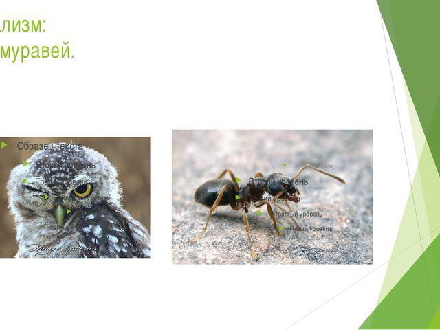 Нейтрализм: сова – муравей.