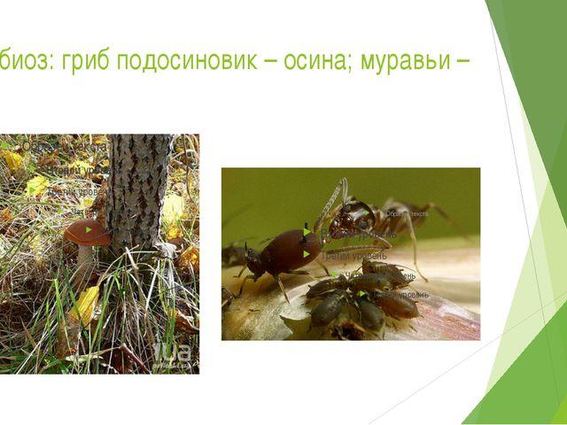 Симбиоз: гриб подосиновик – осина; муравьи – тля.