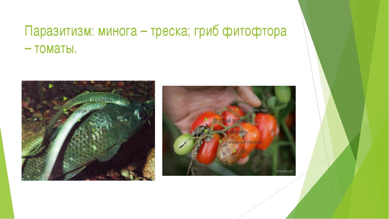 Паразитизм: минога – треска; гриб фитофтора – томаты.