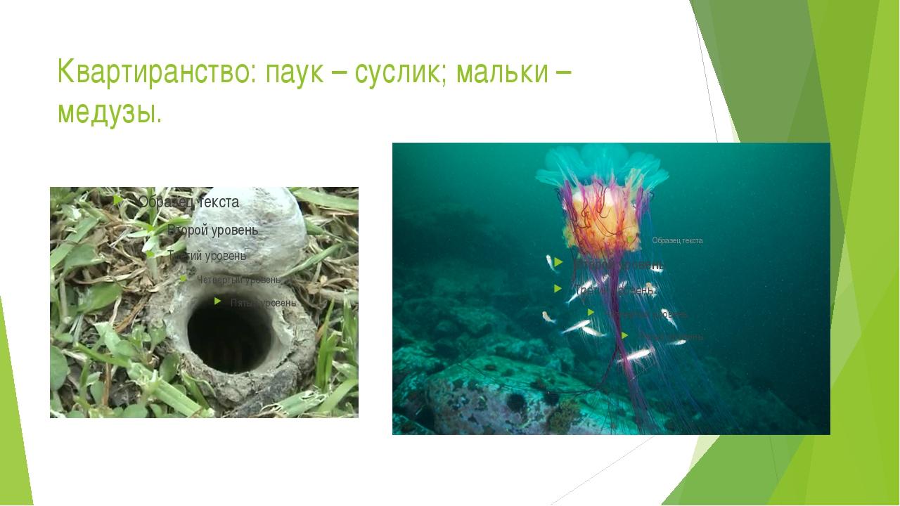 Квартиранство: паук – суслик; мальки – медузы.