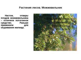 Растения лесов. Можжевельник Настои, отвары плодов можжевельника – отличное
