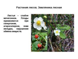 Растения лесов. Земляника лесная Листья – слабое мочегонное. Плоды применяют