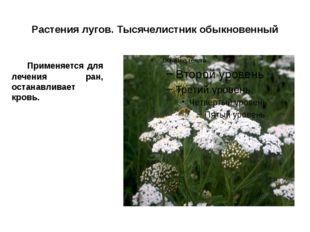 Растения лугов. Тысячелистник обыкновенный Применяется для лечения ран, оста