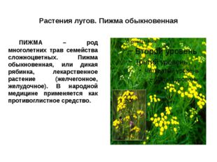 Растения лугов. Пижма обыкновенная ПИЖМА – род многолетних трав семейства сл