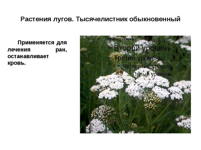Растения лугов. Тысячелистник обыкновенный Применяется для лечения ран, оста...