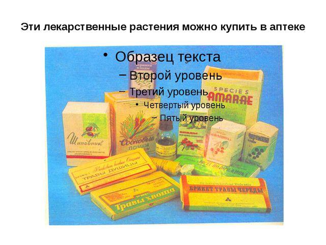 Эти лекарственные растения можно купить в аптеке