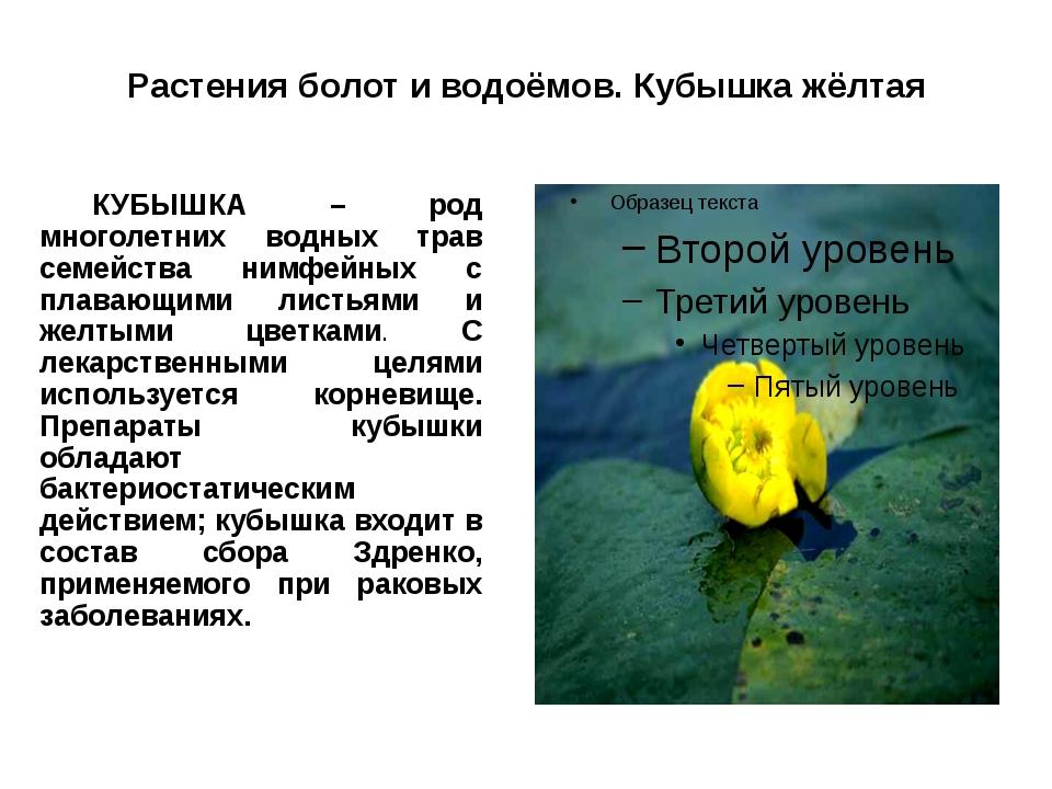 Растения болот и водоёмов. Кубышка жёлтая КУБЫШКА – род многолетних водных т...