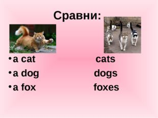 Сравни: a cat cats a dog dogs a fox foxes