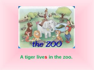 A tiger lives in the zoo.