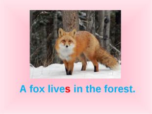 A fox lives in the forest.