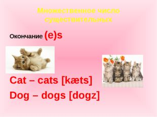 Множественное число существительных Окончание (e)s Cat – cats [kæts] Dog – do