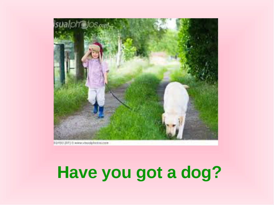 Have you got a dog?