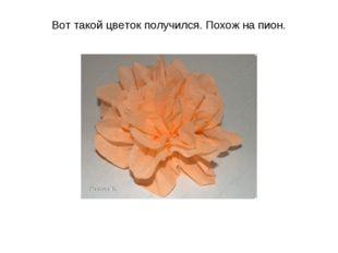 Вот такой цветок получился. Похож на пион.