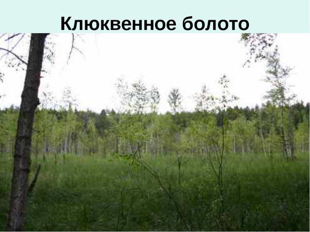 Клюквенное болото